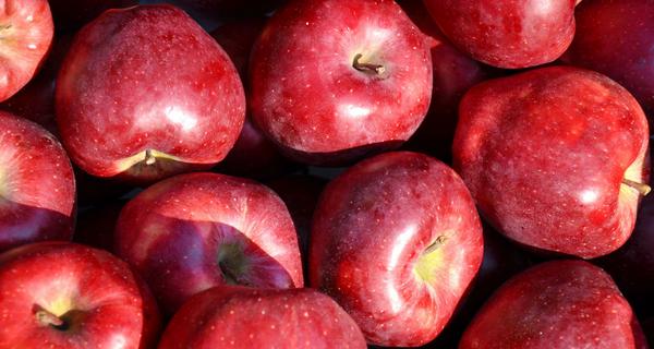 Profitez des saveurs de l'automne en Montérégie!