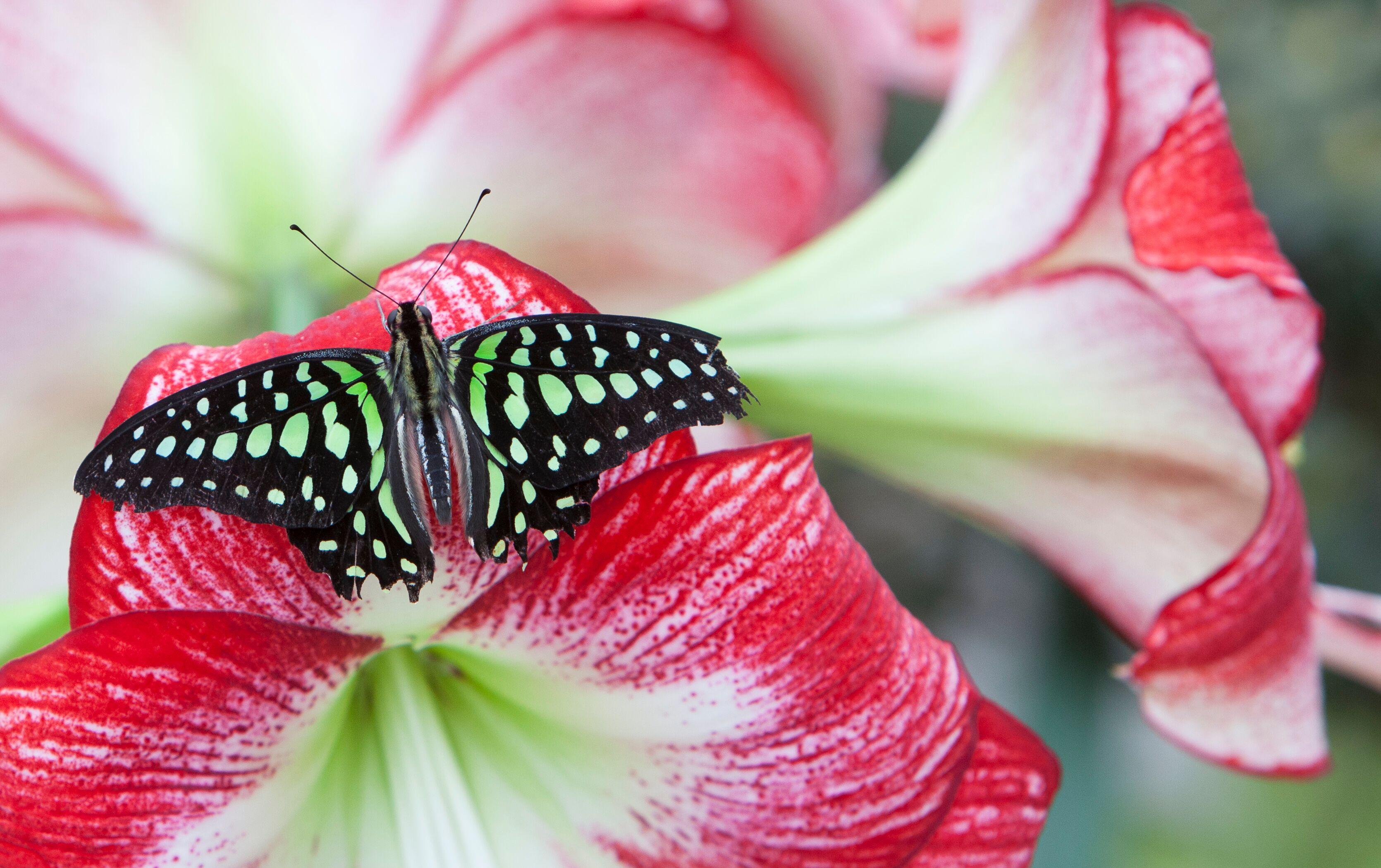 Une relâche entre les papillons et les étoiles à Espace pour la vie!